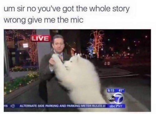 dogs Memes week - 5337861