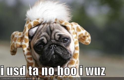 amnesia costume giraffes halloween identity crisis pug uh oh - 5338014464
