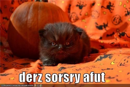 caption captioned cat kitten meowloween sorcery suspicious - 5338121984