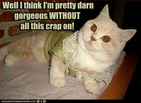 caption captioned cat costume do not want dressed up gorgeous makeup opinion think well without - 5338209024