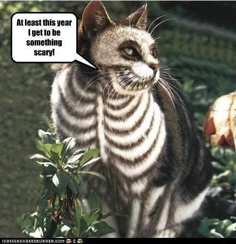 at least be caption captioned cat get makeup meowloween scary skeleton something this year - 5338781696