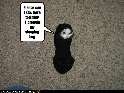 Please can I stay here tonight? I brought my sleeping bag