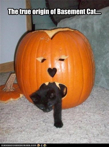 basement cat caption captioned cat emerging kitten meowloween origin pumpkins true
