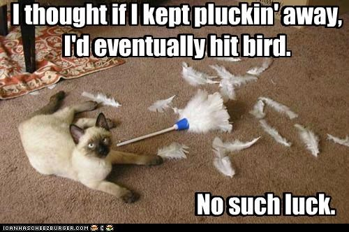 caption,captioned,cat,duster,FAIL,feather,feather duster,feathers,no luck,persistence,plucking,siamese,thought