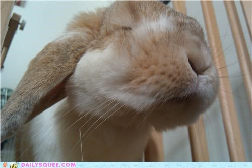 bunny focus happy bunday little mouth photograph rabbit reader squees - 5339976960