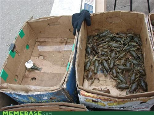 boxes fish food forever alone sigh - 5340393984