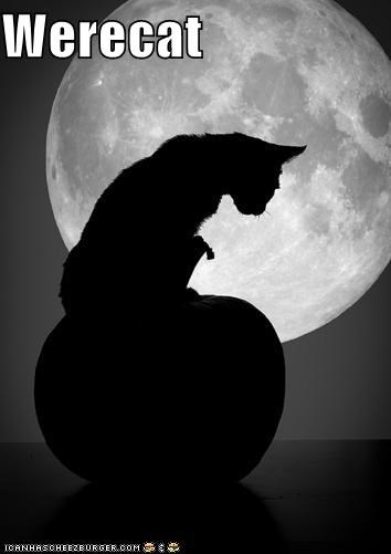 caption captioned cat lycanthrope meowloween prefix were - 5340699392