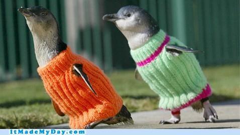 animals cute good news happy hopeful news penguins story sweaters win - 5340765952