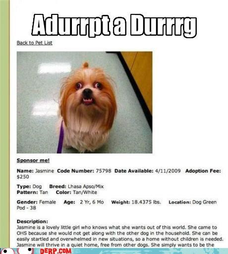 adopt a dog,adoption,best of week,critters,cute,derp,dogs,pet