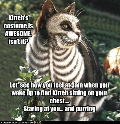 Kitteh's costume is AWESOME, isn't it? Let' see how you feel at 3am when you wake up to find Kitteh sitting on your chest.... Staring at you... and purring