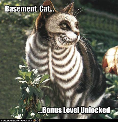 Basement Cat... ...Bonus Level Unlocked