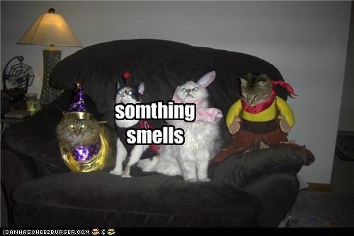 somthing smells Cleverness Here