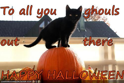caption captioned cat ghouls halloween happy meowloween perching pumpkins - 5341070080