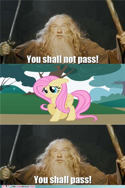 fluttershy,gandalf,Lord of the Rings,you shall not pass