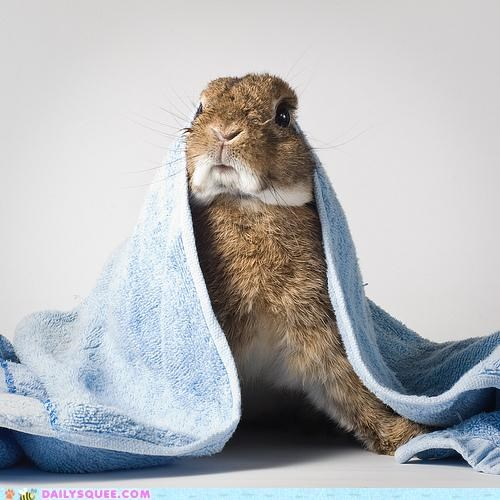 acting like animals alarmed bunny Hall of Fame happy bunday hearing paranoid rabbit scared shocked sound startled - 5341366784