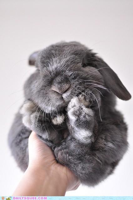 ball bundle bunny compact curled up Hall of Fame happy bunday pun rabbit - 5341393408