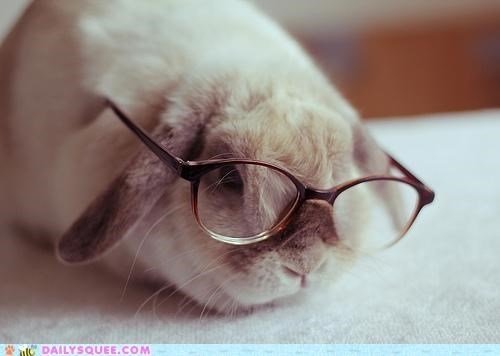 bunny glasses happy bunday morning news newspaper pun rabbit reading - 5341410560