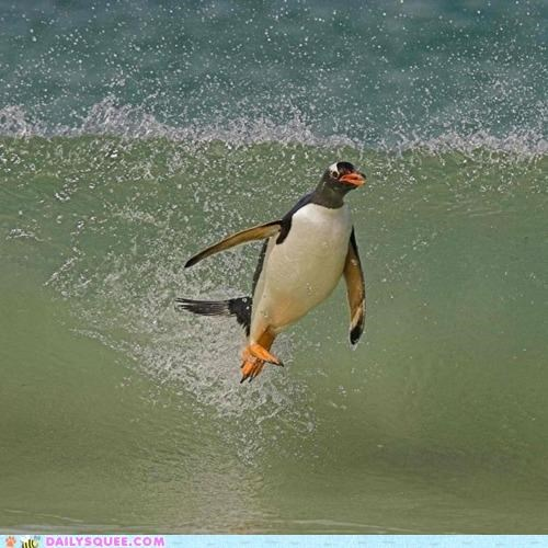 acting like animals dialect invisible penguin riding slang surfing wave - 5341429760