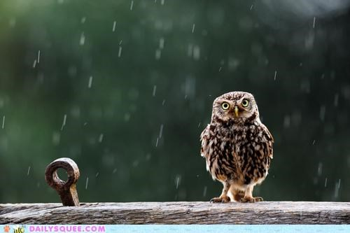 gene kelly,lyrics,Owl,parody,rain,raining,Singing in the rain,song