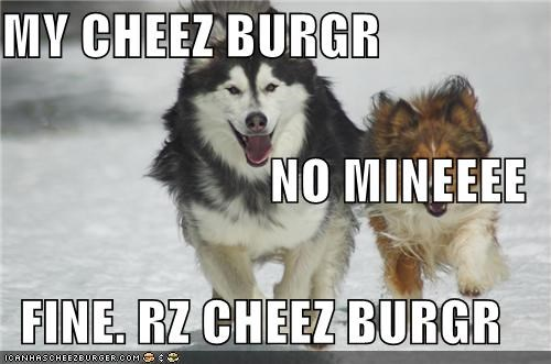 Cheezburger Image 5341521920