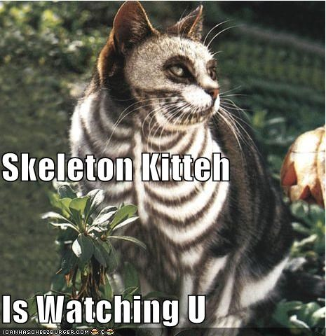 cat,halloween,I Can Has Cheezburger,skeleton,watching you