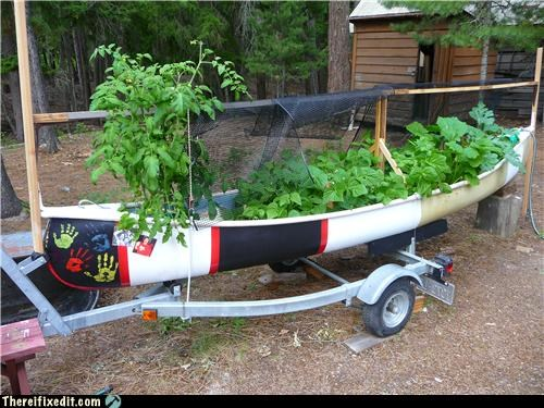 boat,canoe,dual use,plants
