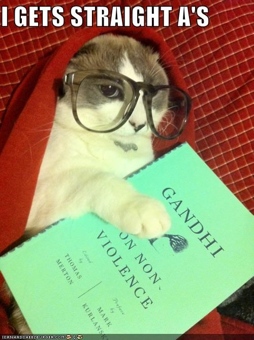 cat glasses hipster hipster cat I Can Has Cheezburger reading smarty pants straight-as - 5341865472