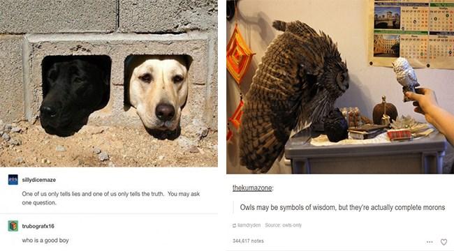 tumblr posts animals - 5341957