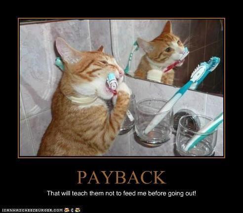 PAYBACK That will teach them not to feed me before going out!