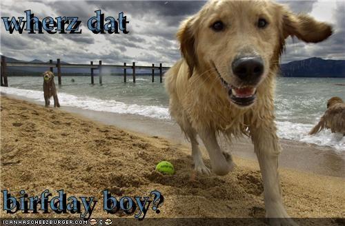 Cheezburger Image 5342467584