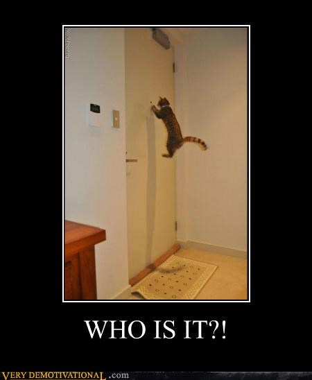 animals cat hilarious who is it - 5342649344