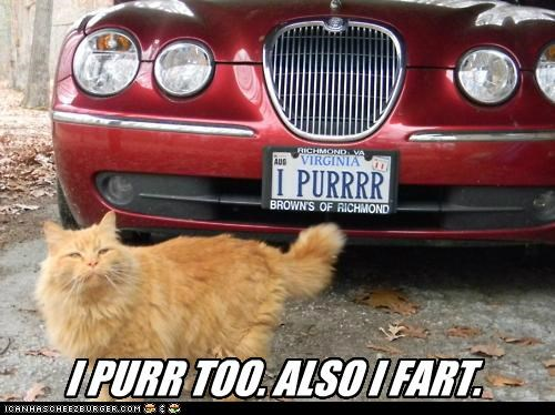also caption captioned cat custom fart license plate me too message purr - 5342834432