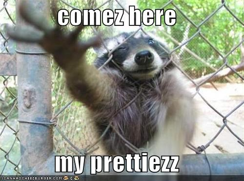 adorbz,animals,come here,pretty,raccoon,silly animals