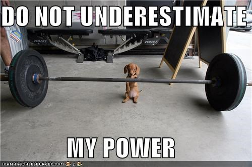 dachshund do not underestimate me exercise power powerful pumping iron puppy weight training weights - 5344605184
