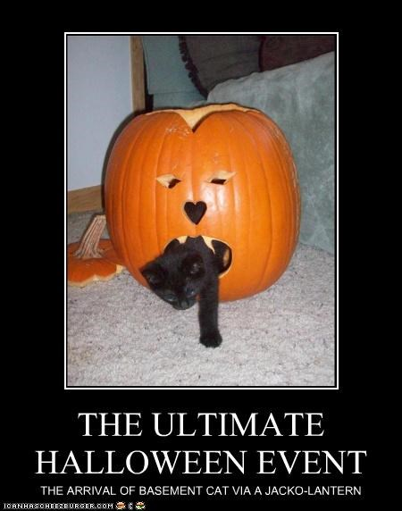 THE ULTIMATE HALLOWEEN EVENT THE ARRIVAL OF BASEMENT CAT VIA A JACKO-LANTERN
