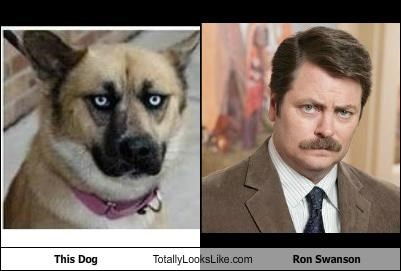 animal,dogs,funny,Hall of Fame,Nick Offerman,ron swanson,TLL