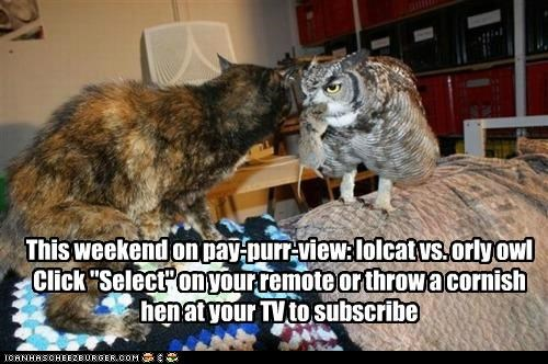 Battle caption captioned cat directions instructions Owl pay per view ppv pun subscribe versus