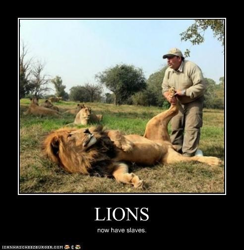 LIONS now have slaves.