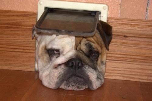 doggeh Sundog - 5346743040