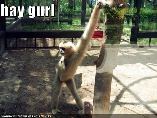animals,best of the week,flirt,flirting,Hall of Fame,hey girl,ladies man,monkey