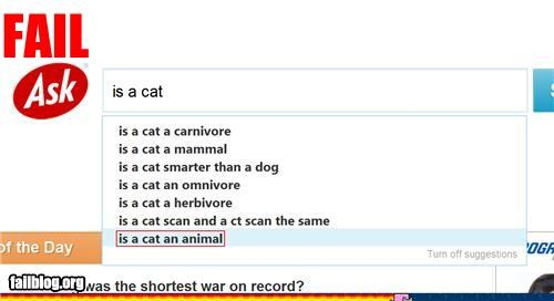 Ask Cat Fail Is a cat real?