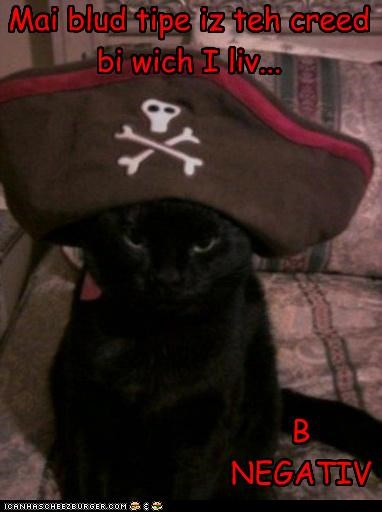 b be Blood caption captioned cat costume creed double meaning dressed up hat life mission motto negative Pirate pun type