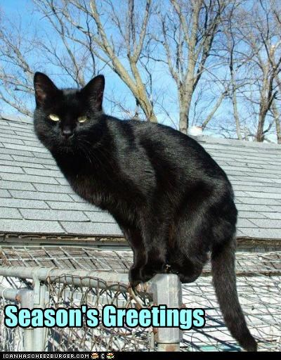 and be nice to black cats!