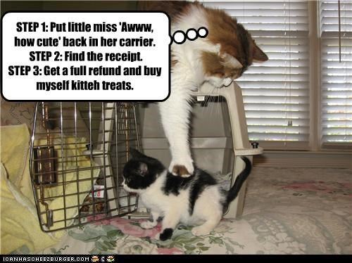 Adding a new kitteh is not always easy.