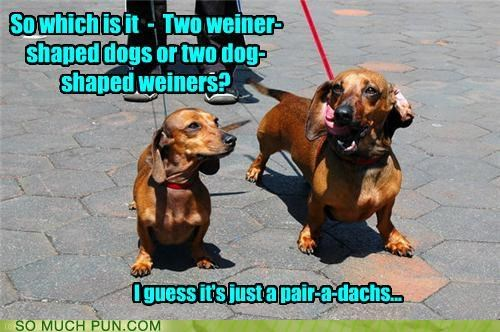 abbreviation,dachshunds,Hall of Fame,homophones,literalism,pair,paradox,similar sounding