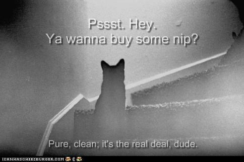 caption,captioned,cat,catnip,drugs,nip,offer,real,shady,sketchy