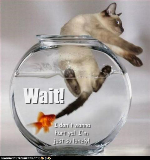 biting,caption,captioned,cat,dont,escaping,explanation,fish,goldfish,holding,hurt,lonely,reason,siamese,wait,want