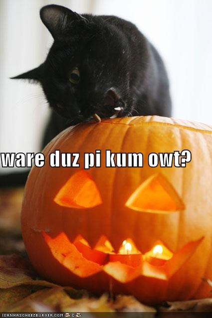 biting caption captioned cat confused jack-olantern meowloween pie pumpkins question - 5348862976