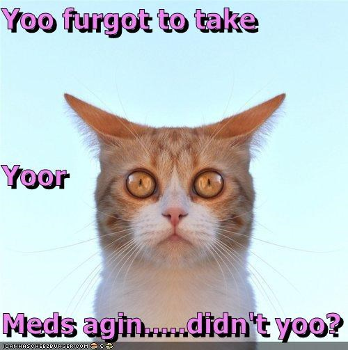 cat,happy pills,I Can Has Cheezburger,medicine,meds,shocked