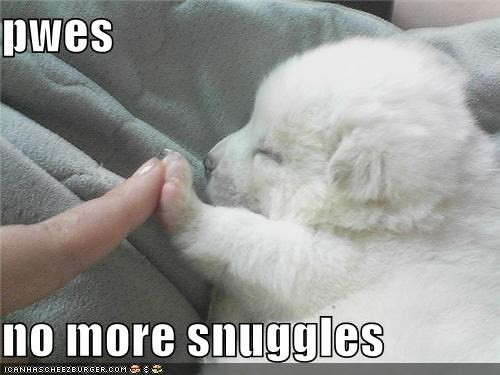 asleep cuddle cuddles go away no no more no thanks puppy sleep sleeping snuggle snuggles whatbreed - 5350387712